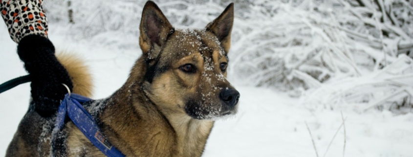 dog in the snow photo