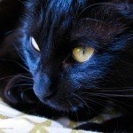 black cat close look photo