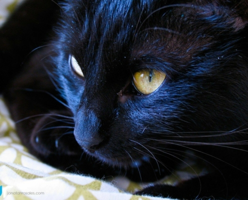 black cat close look photo