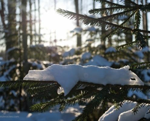 snow detail on a three