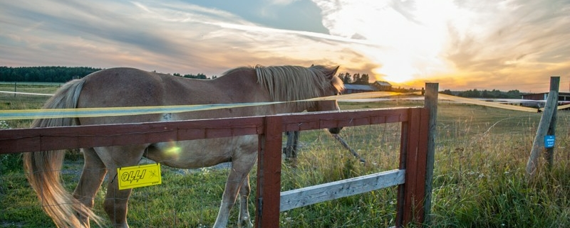 Finish horse during sunset photo
