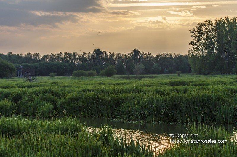 Salburua Wetlands Sunset II