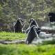 Lemurs sunbathing